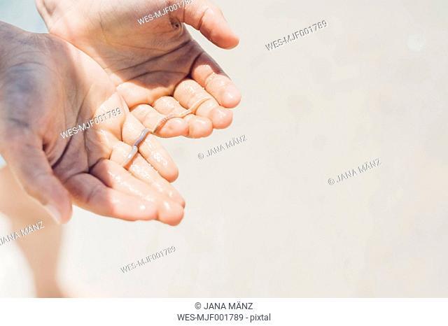 Lugworm in boy's hands