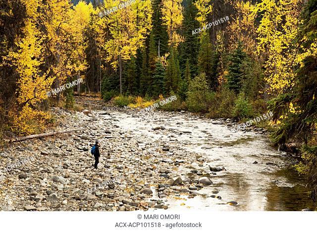 A hiker walks towards a creek in E.C. Manning Provincial Park