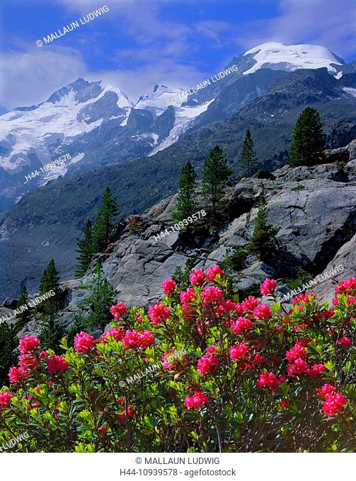 Switzerland, Graubünden, Grisons, Engadin, Oberengadin, Pontresina, Morteratschtal, mountains, Bernina, Alps, east alps, Alps, Piz Bernina, Biancograt