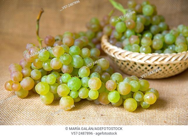 Bunch of grapes from Vinalopo. Spain
