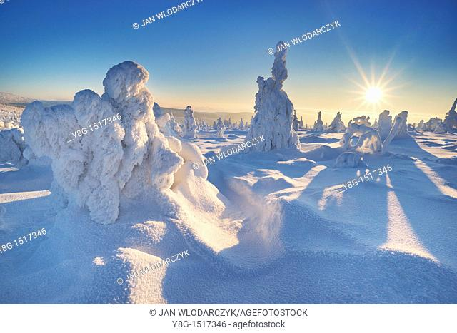 Snowy trees at the Szrenica peak, Karkonosze National Park, Poland, Europe