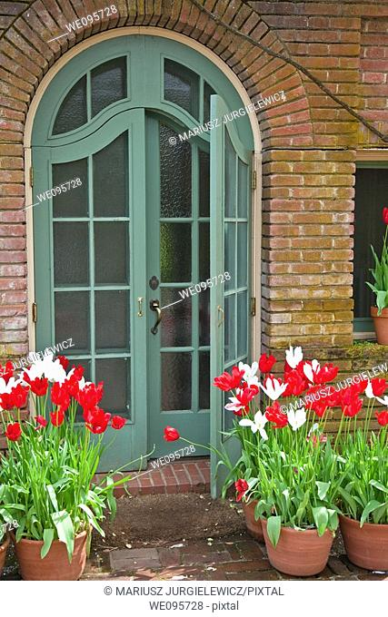A tulip is a bulbous plant in the genus Tulipa, comprising 109 species with showy flowers, in the family Liliaceae