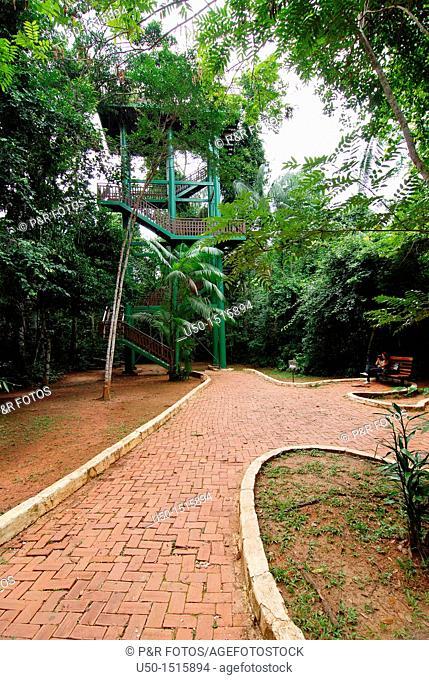 View of Parque Ambiental Chico Mendes, Rio Branco, Acre