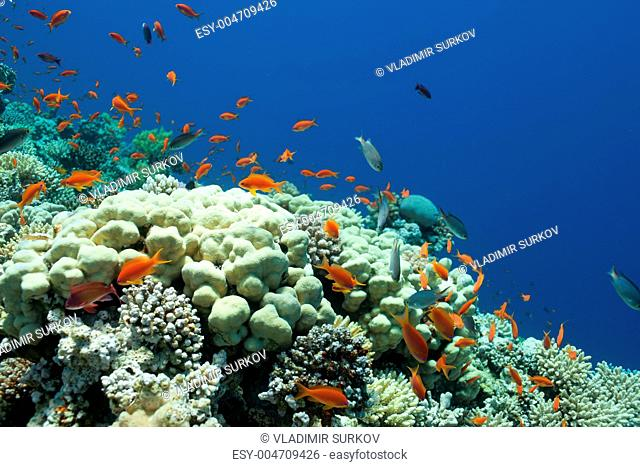 fish and corals in the sea