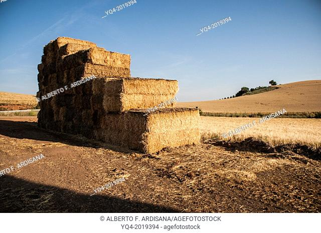 Grain fields. Cereals once harvested and packaged. La Rioja. Spain