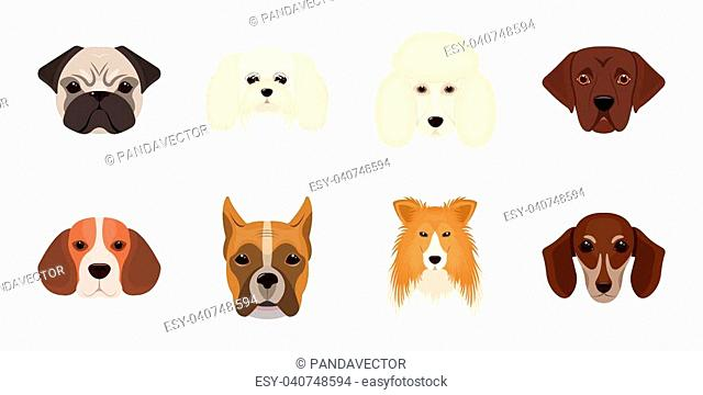 Dog breeds icons in set collection for design.Muzzle of a dog vector symbol stock illustration