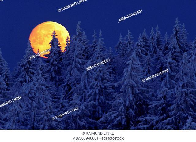 Full moon, conifers, snow, night