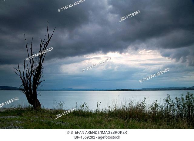 Old tree and rain clouds in the evening light, Lake Constance, Baden-Wuerttemberg, Germany, Europe