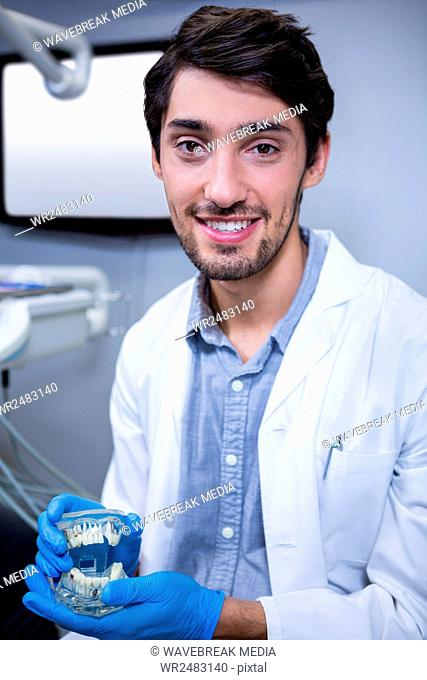 Portrait of dentist studying model of mouth