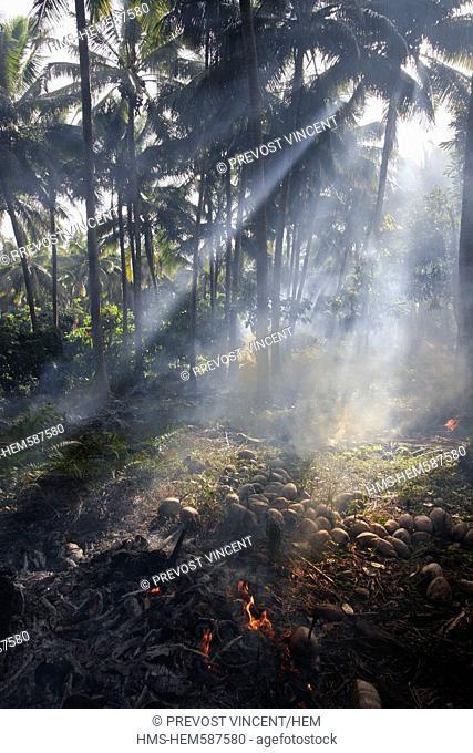 Vanuatu, Malampa Province, Malekula Island, Lokatoro, burning of coconut shells