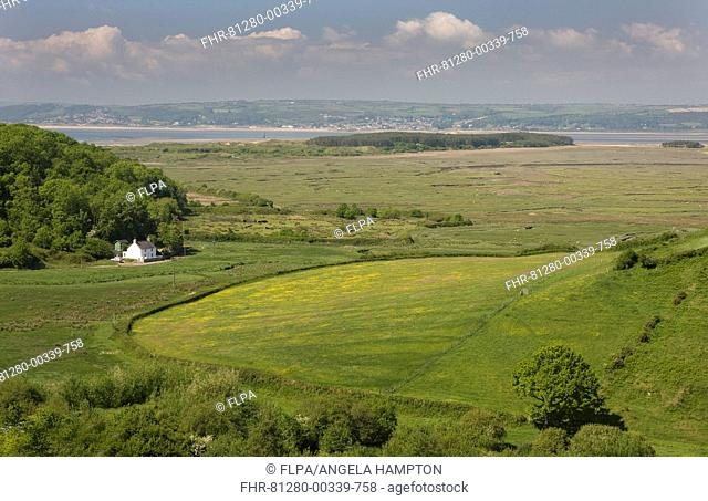 View of pasture, saltmarsh and coastline, Llanmadoc, Llanridian Sands, Burry Port, Gower Peninsula, Glamorgan, Wales, june