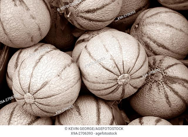 Gala Melon Fruit on Market Stall, France in Black and Sepia Tone