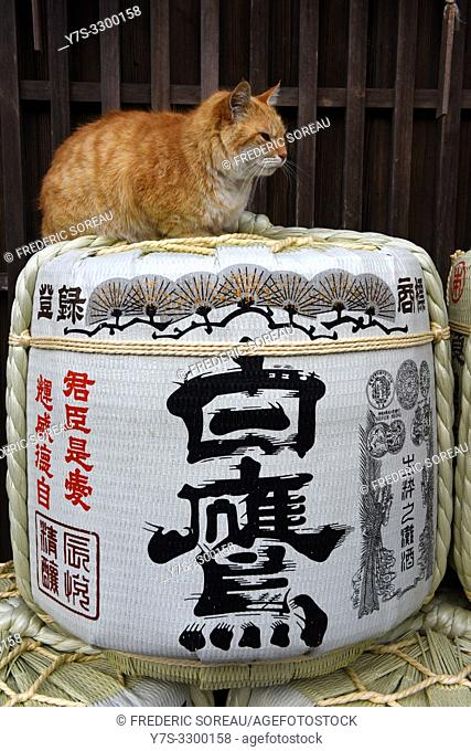 A cat at the top of Sake Barrels in Ise, Japan, Asia