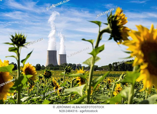 Golfech Nuclear Power Plant and sunflowers field, Tarn et Garonne, France, Europe