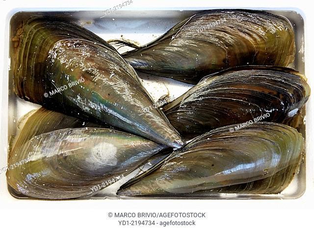 Mussels at Tsukiji fish market