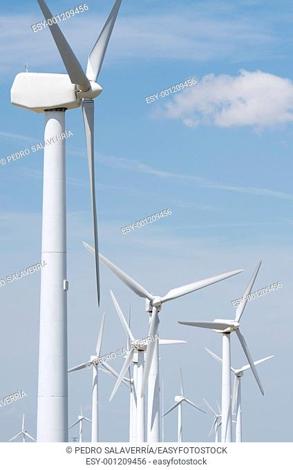 group of windmills for electric power production ecological, La Muela, Saragosa, Aragon, Spain