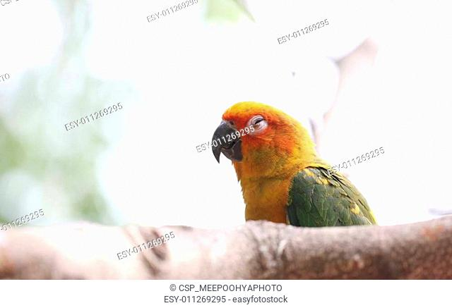 parakeet or parrot is sleeping on tree branch