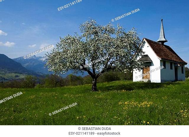 Spring landscape in mountains, apls