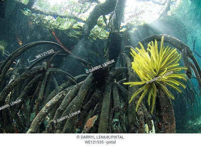 Mangroves, Raja Ampat, Indonesia