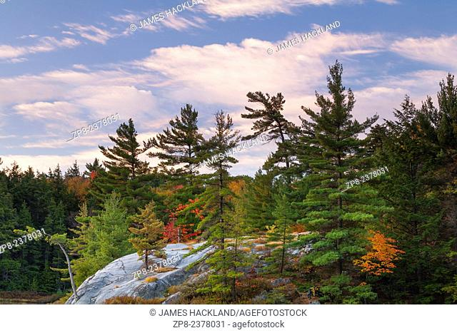 A rock outcrop with trees growing from the shallow soil at sunrise. Killarney Provincial Park, Ontario, Canada