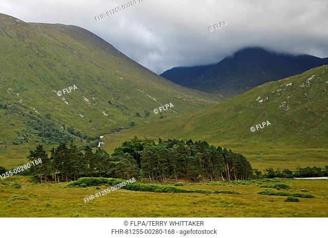 View of moorland valley with pine trees, Glen Etive, Highlands, Scotland