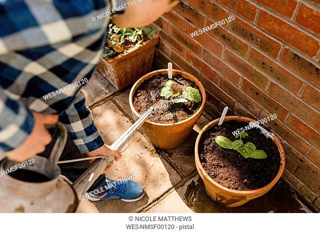 Boy watering seedling in flower pot