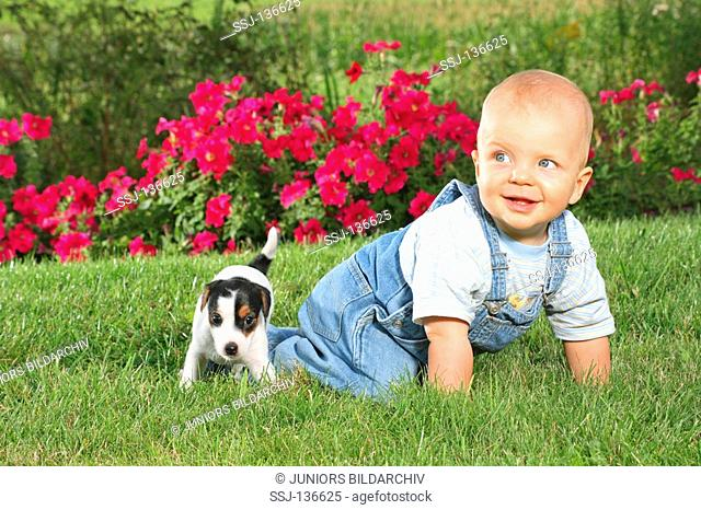 boy and Jack Russell Terrier puppy