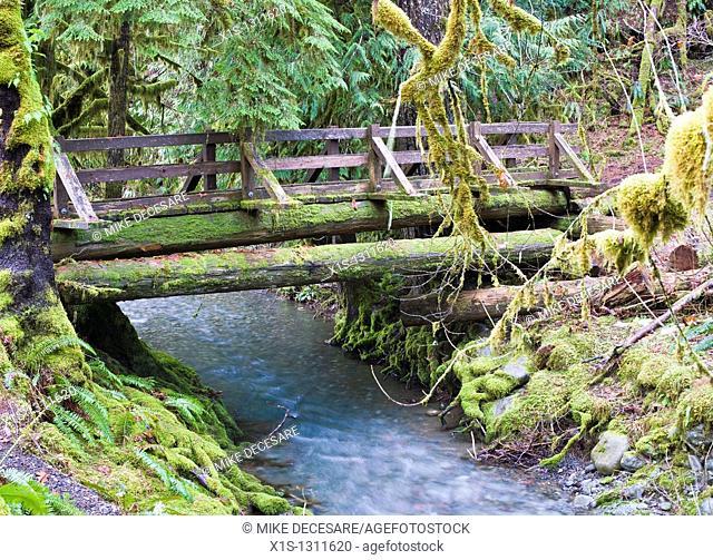 Wooden bridge crosses Elk Creek in the Staircase on the Olympic Peninsula