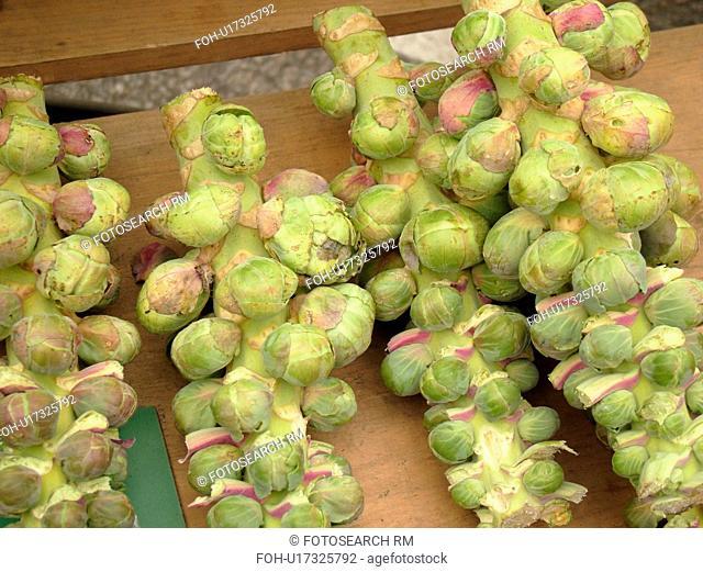 Montpelier, VT, Vermont, Farmer's Market, Brussel Sprouts