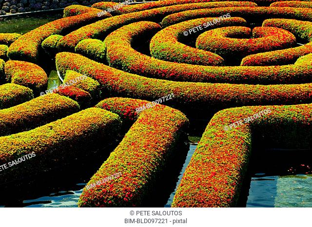 Maze-shaped hedges in formal garden