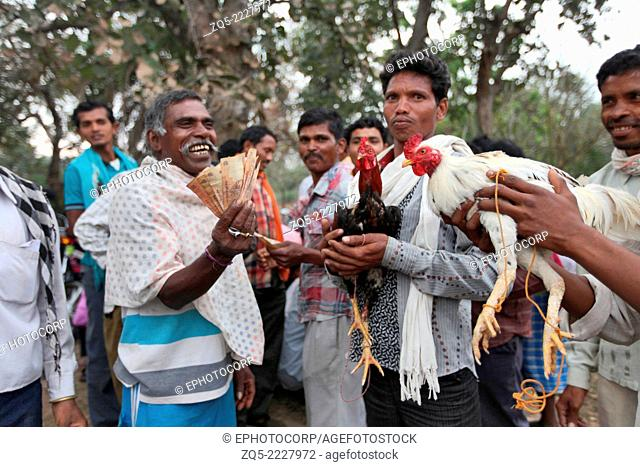 Cocks ready for the fight, Muriyan Village, Chhattisgarh, India