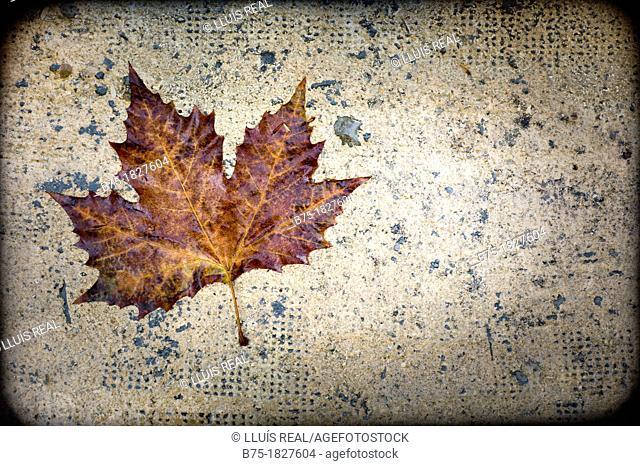 Dry leaf, Nature, tree leaf, Fall, Winter