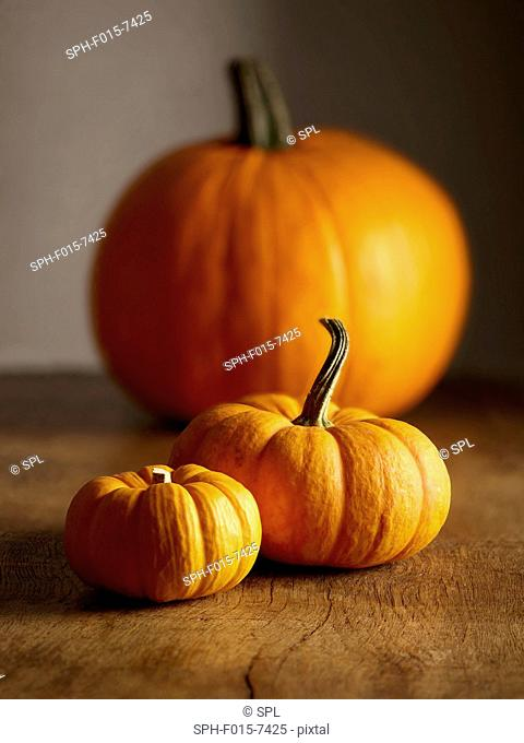Jack o lantern (Cucurbita pepo) and Jack be little miniature (Cucurbita pepo) pumpkins, still life