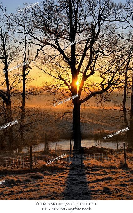 winter,sunrise ,sussex,england,uk,europe
