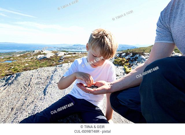 Boy taking berries from father's hand on rock, Aure, More og Romsdal, Norway