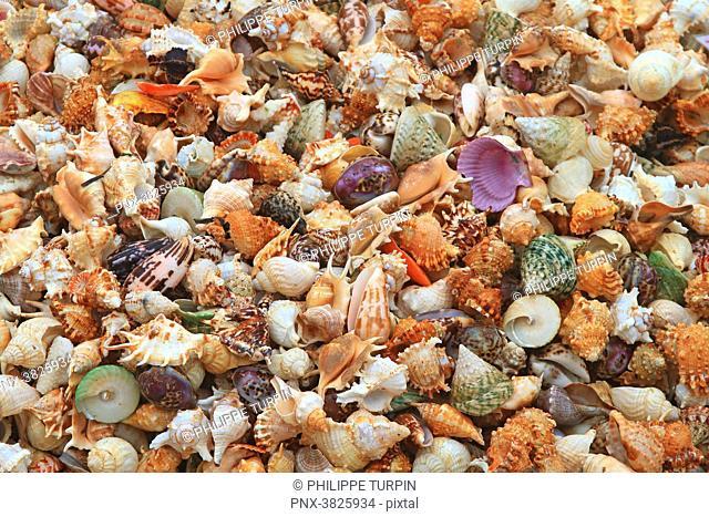 Asia, China, Shandong Province, Qingdao. Shells