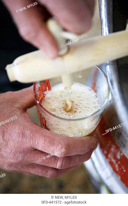 Drawing a glass of beer from a barrel
