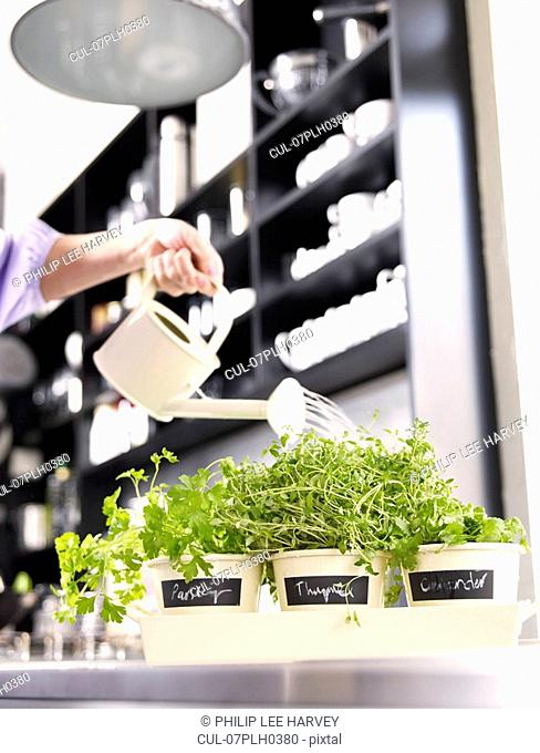 Woman watering herbs in kitchen