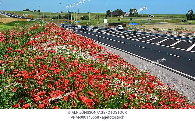 Flowers at highway