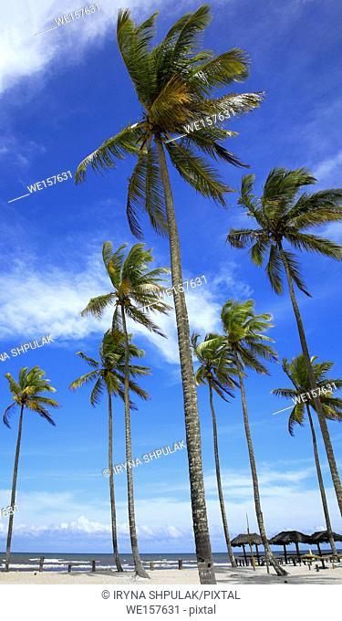 Palm trees on the beach of Ilha Atalaia, Praia da Costa, Canavieiras, Bahia, Brazil, South America