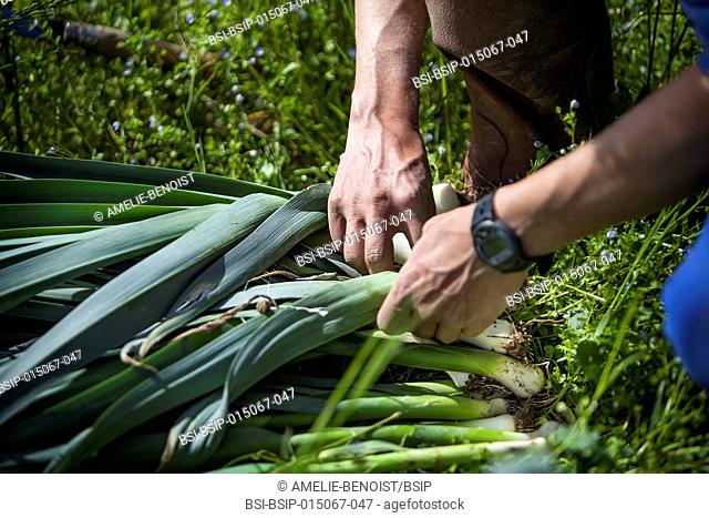Reportage on organic producers working using a community-shared agriculture model in Haute-Savoie, France. Rémi has been an organic fruit and vegetable grower...