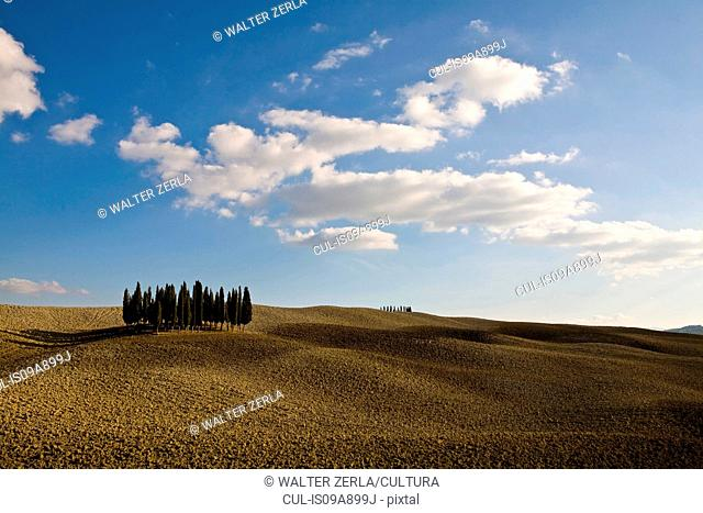 Ploughed fields and cypress trees, Tuscany, Italy