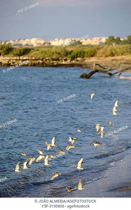 The wildlife haven of the Tagus estuary, nearby Lisbon