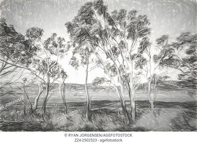 Digital pencil sketch of a typical Australian landscape scene with gum trees and cleared acreage. Fine art landscapes