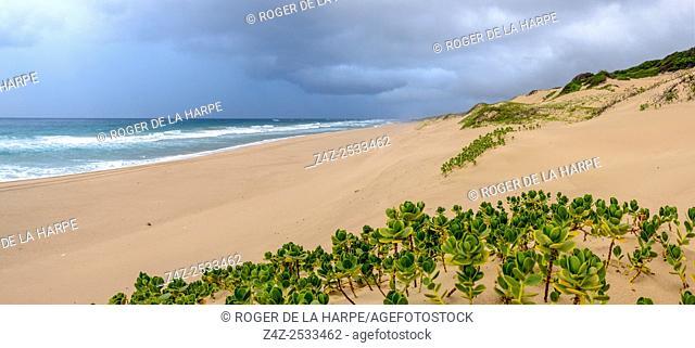 Storm at sea on the Maputaland Coast showing dune vegetation. Mabibi. iSimangaliso Wetland Park (Greater St Lucia Wetland Park). KwaZulu Natal