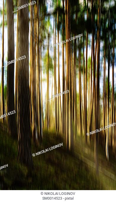 Vertical vivid motion tree landscape with light leak abstraction background backdrop