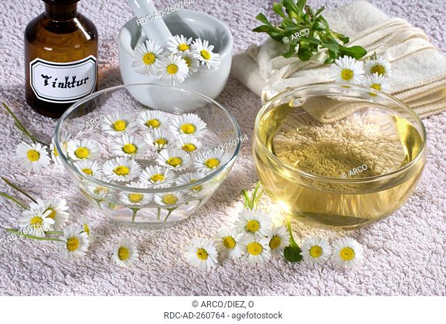 Cup of Daisy tea Daisy tincture and Daisy essence Bellis perennis