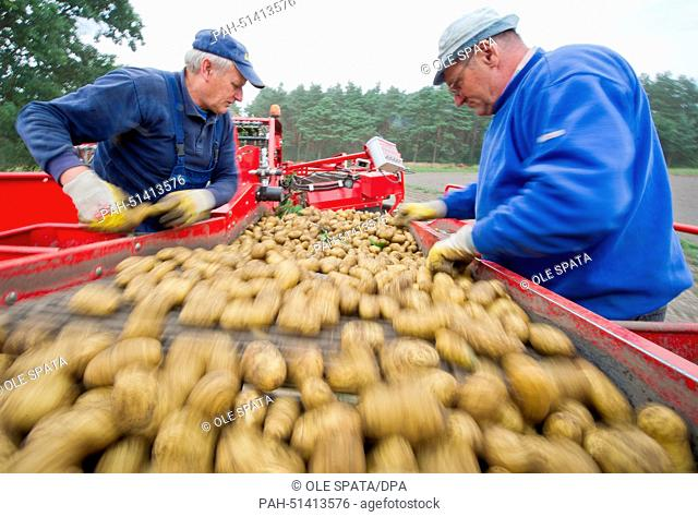 Two men sort potatoes on a harvesting vehicle in Ramlingen, Germany, 25 August 2014. Lower Saxony is Germany's number one potato state followed by Bavaria and...