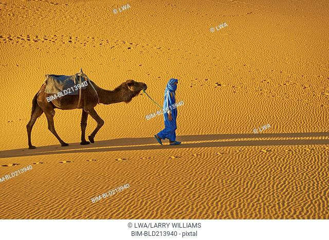 Guide leading camel on sand dune