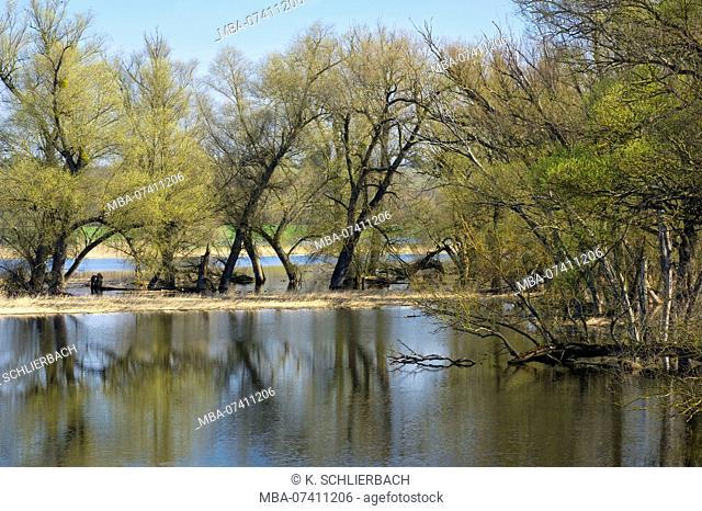 Germany, Brandenburg, Uckermark, Criewen, National Park Lower Oder Valley, gallery forest in the Criewener Polder